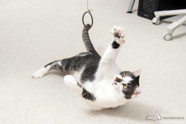Fensterkatzen-Do-It-Yourself-Spielangel-Katzen-ganz-leicht-selbst-gemacht-Titelbild