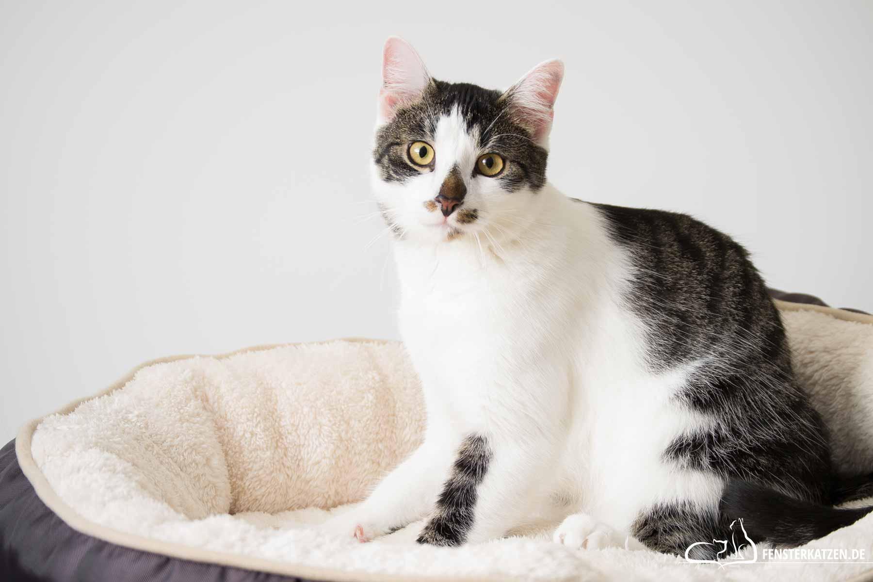 Fensterkatzen-Ratgeber-Erstausstattung-Katze-Titelbild
