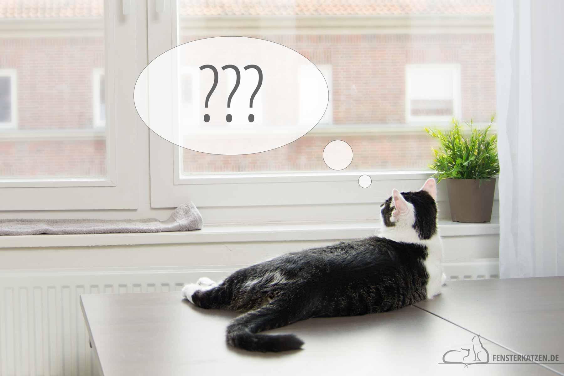 Fensterkatzen-Ratgeber-Was-sollte-man-sich-vor-der-Aufnahme-einer-Katze-fragen-Titelbild