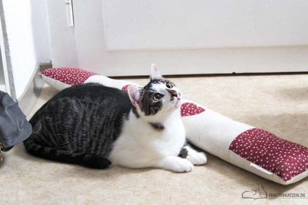 Fensterkatzen-Das-Erste-Mal-Nach-der-Adoption-die-Wohnung-verlassen-Titelbild