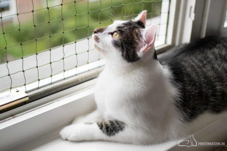Fenstersicherung für Katzen ohne Bohren
