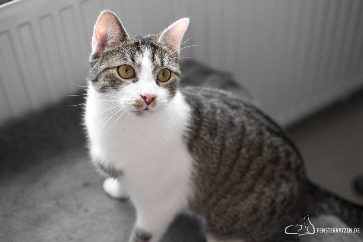 Fensterkatzen-Das-Erste-Mal-Eine-Fliege-jagen-Titelbild