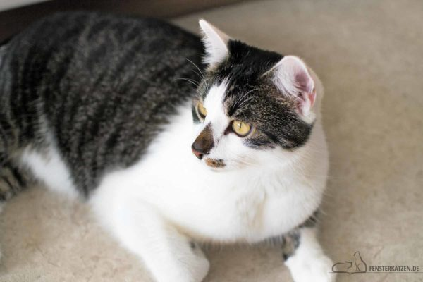 Fensterkatzen-Alltag-Tagebuch-eines-Katers-auf-Diaet-03-Titelbild