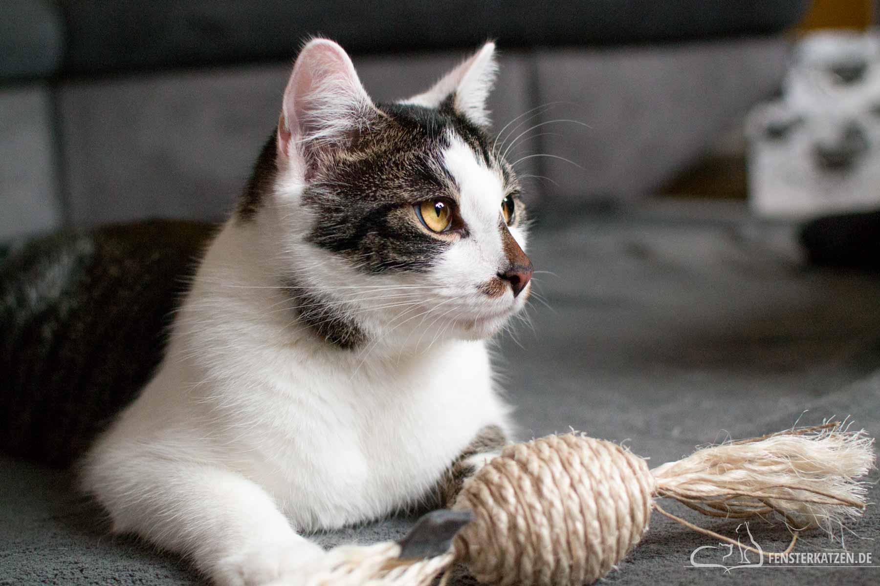 Fensterkatzen-Getestet-Katzenspielzeug-Sisalbonbon-XL-Leylahs-Sisaltraeume-Titelbild