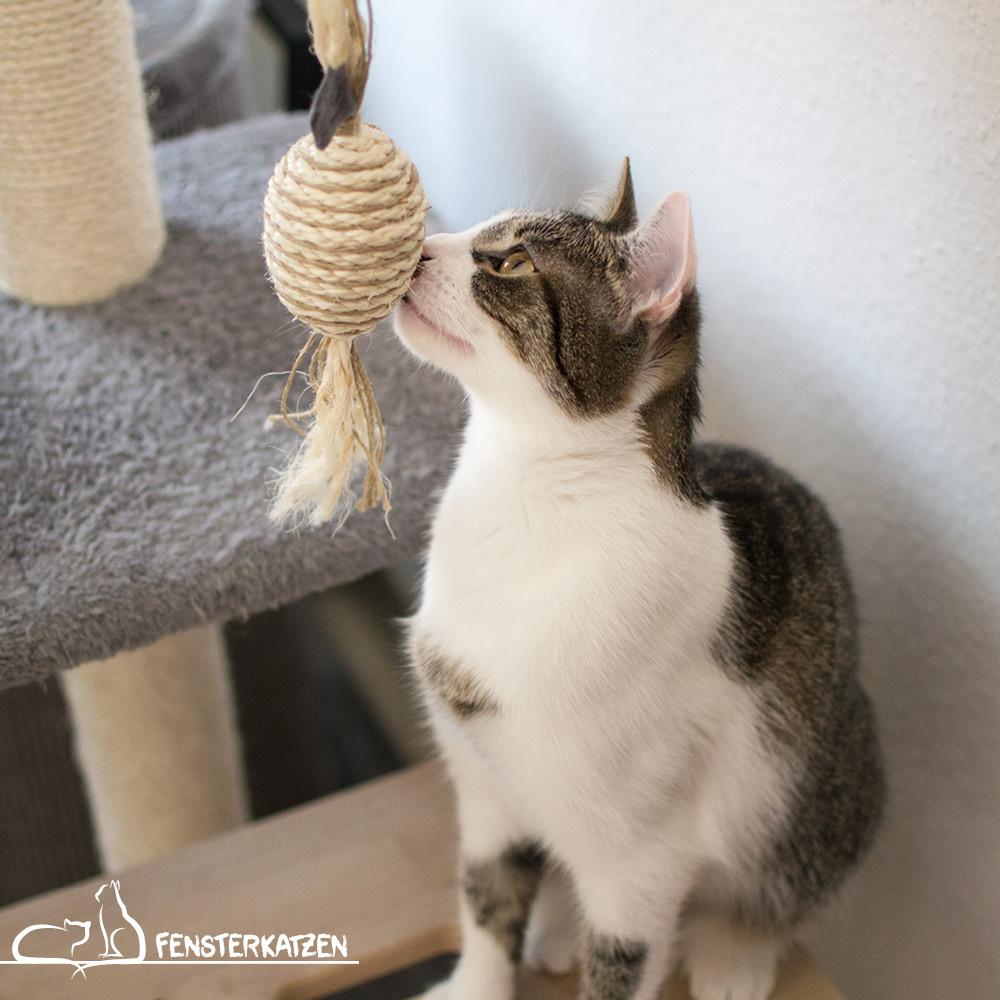 Beitragsbild Getestet Produkttest Sisalbonbon Leylah's Sisalträume Katzenspielzeug Sisal