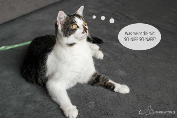 Fensterkatzen-Das-Erste-Mal-Eine-Katze-kastrieren-lassen-Titelbild
