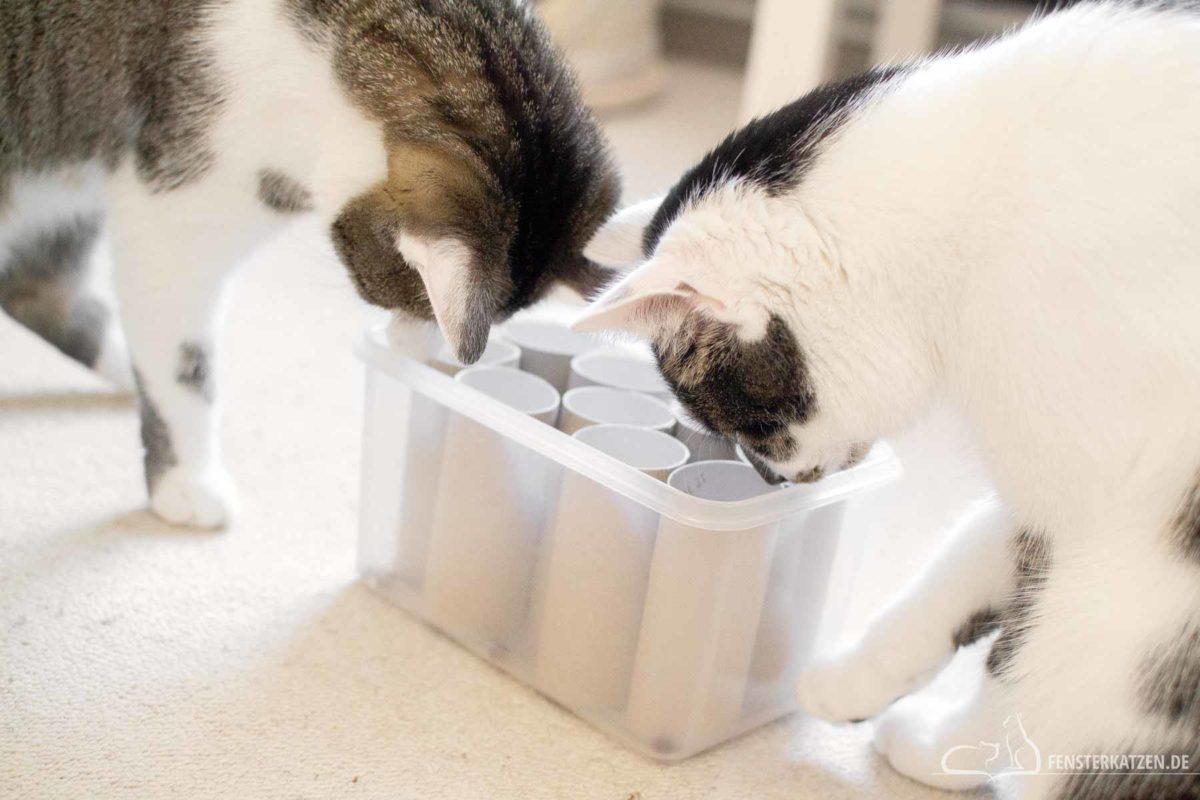 Fensterkatzen-Do-It-Yourself-3-Spielzeuge-Katzen-in-unter-5-Minuten-Titelbild