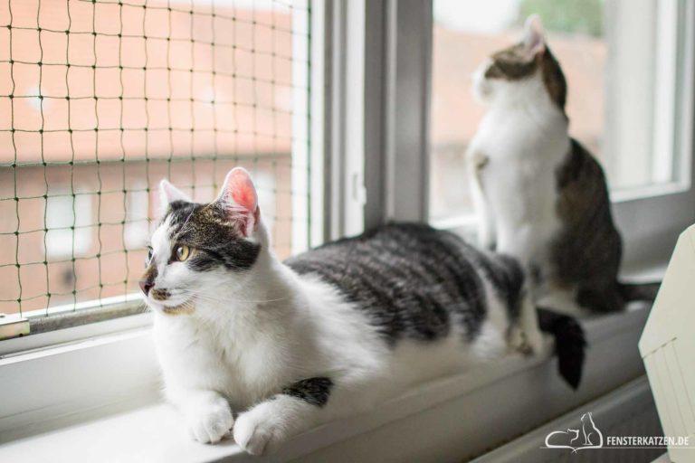 Kastration bei Kater und Katze