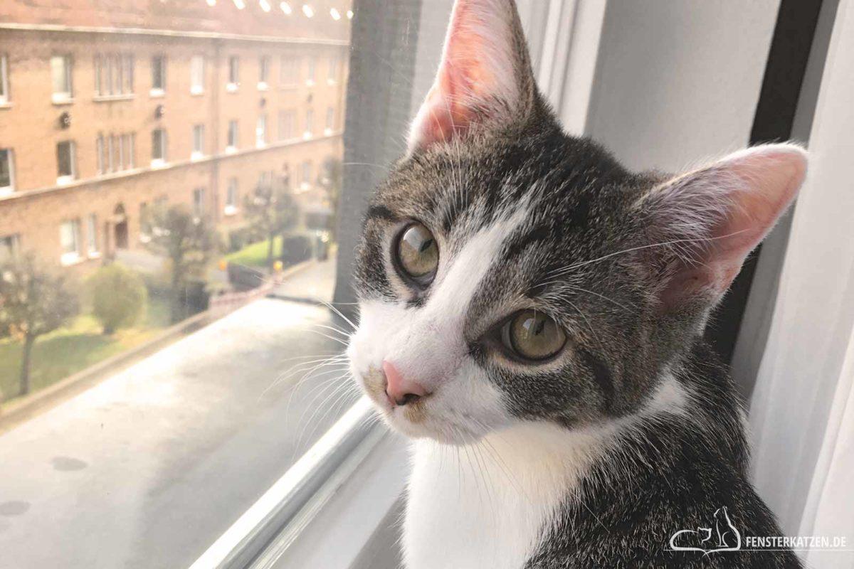 Fensterkatzen-Das-Erste-Mal-Besuch-Bekommen-Titelbild