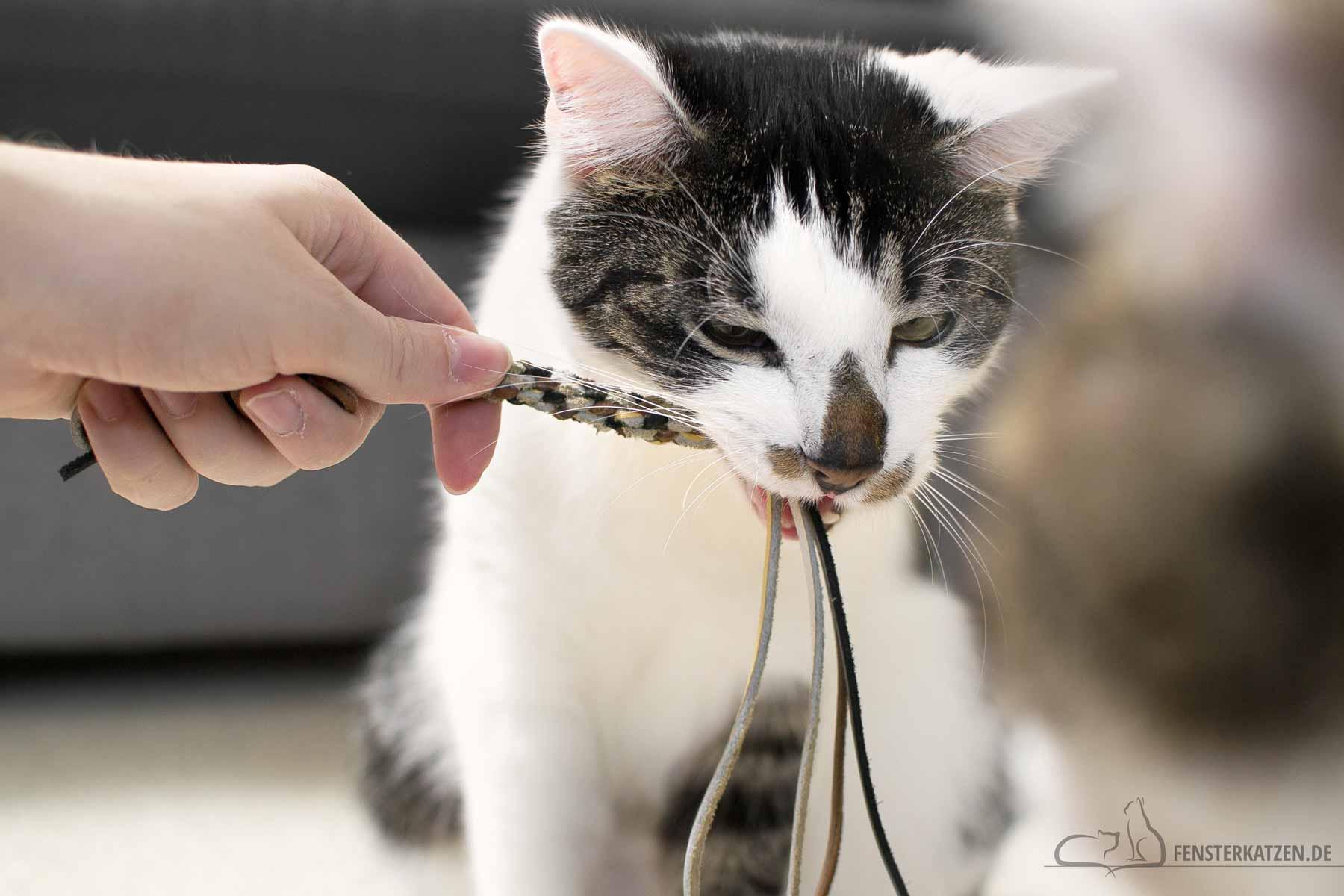 Fensterkatzen-DIY-Kauspielzeug-aus-Lederbaendern-Katzen-Titelbild