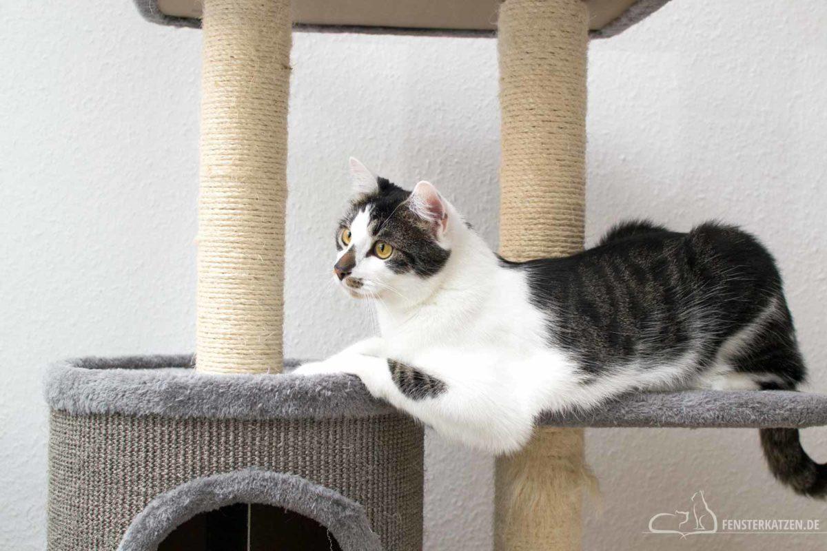 Fensterkatzen-Getestet-Kratzbaum-Filou-Bontoy-Titelbild