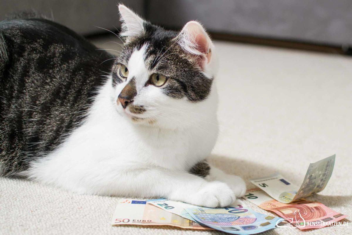 Fensterkatzen-Ratgeber-Wie-viel-kostet-eine-Katze-Titelbild
