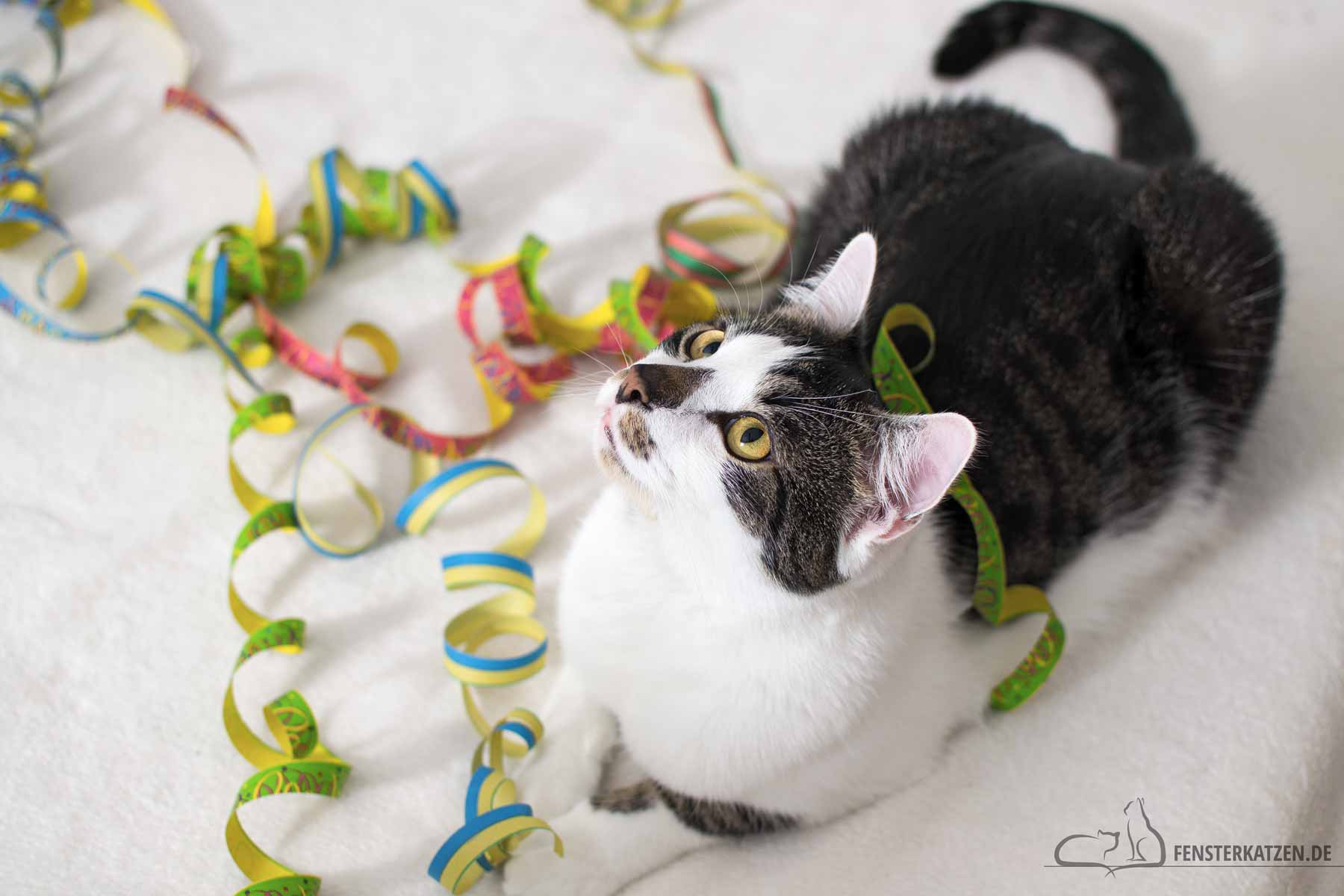 Fensterkatzen-Das-Erste-Mal-Silvester-mit-Katzen-Titelbild