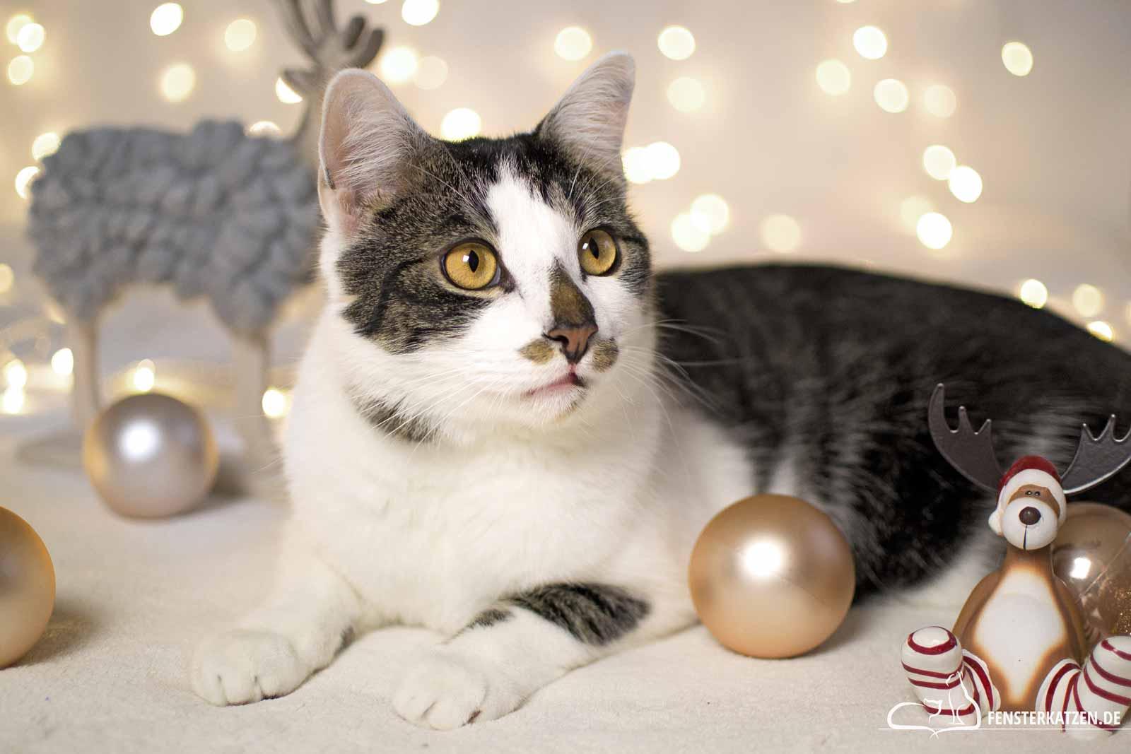 Fensterkatzen-Das-Erste-Mal-Weihnachten-mit-Katzen-Titelbild
