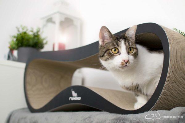 Fensterkatzen-Getestet-Katzen-Kratzmöbel-mykotty-Titelbild
