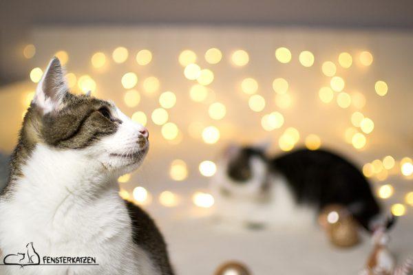 Fensterkatzen_Das-Erste-Mal_Weihnachten-mit-Katzen_01