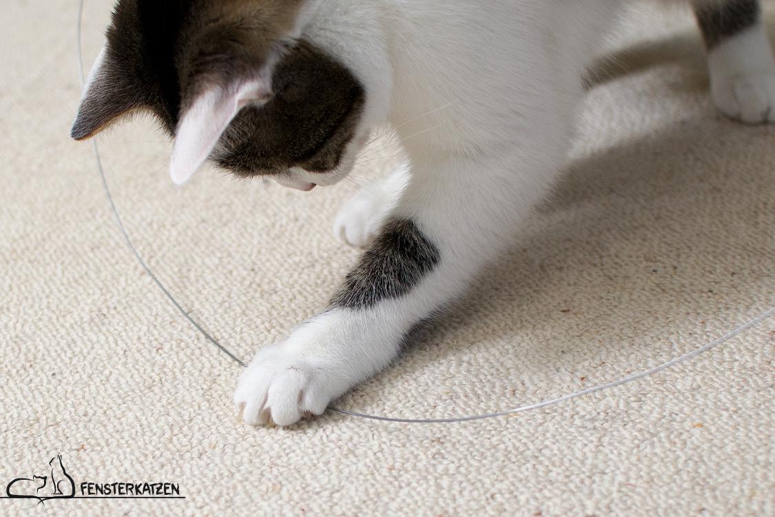Fensterkatzen_Do-It-Yourself_Catdancer-Original-vs-DIY_Action-01