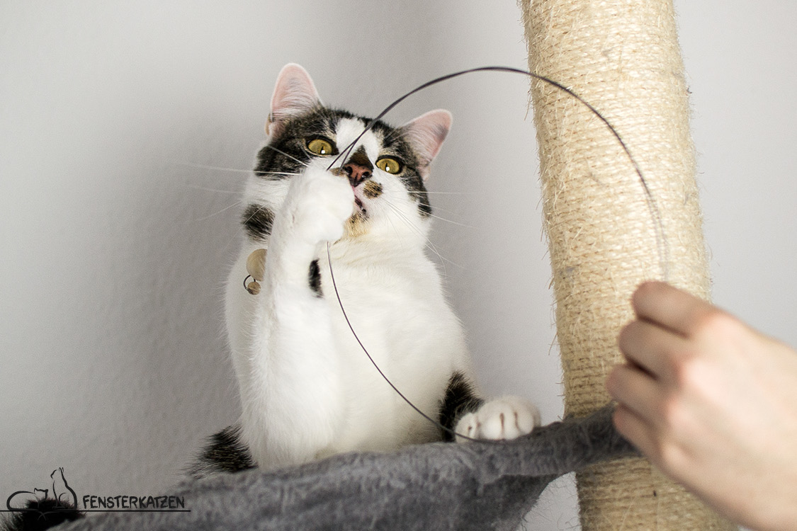 Fensterkatzen_Do-It-Yourself_Catdancer-Original-vs-DIY_Action-06