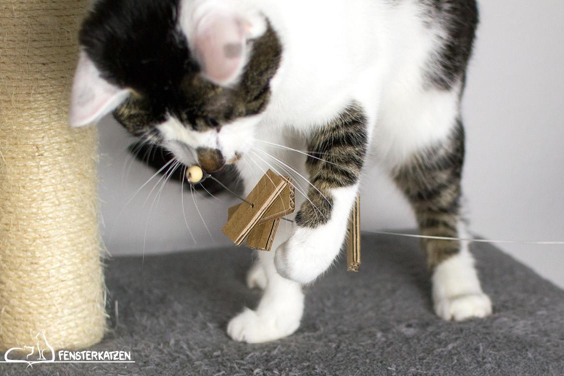 Fensterkatzen_Do-It-Yourself_Catdancer-Original-vs-DIY_Action-07