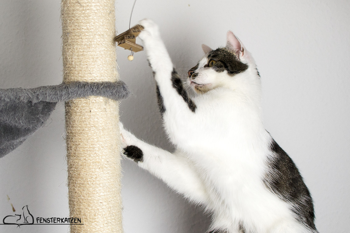 Fensterkatzen_Do-It-Yourself_Catdancer-Original-vs-DIY_Action-08