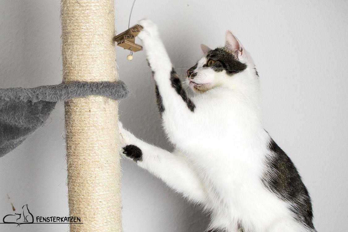 Fensterkatzen_Do-It-Yourself_Catdancer-Original-vs-DIY_Action-08