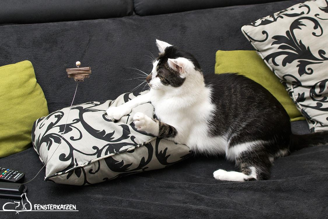 Fensterkatzen_Do-It-Yourself_Catdancer-Original-vs-DIY_Action-09