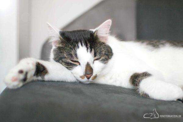 Fensterkatzen-Das-Erste-Mal-Die-Nacht-Zusammen-Verbringen-Titelbild