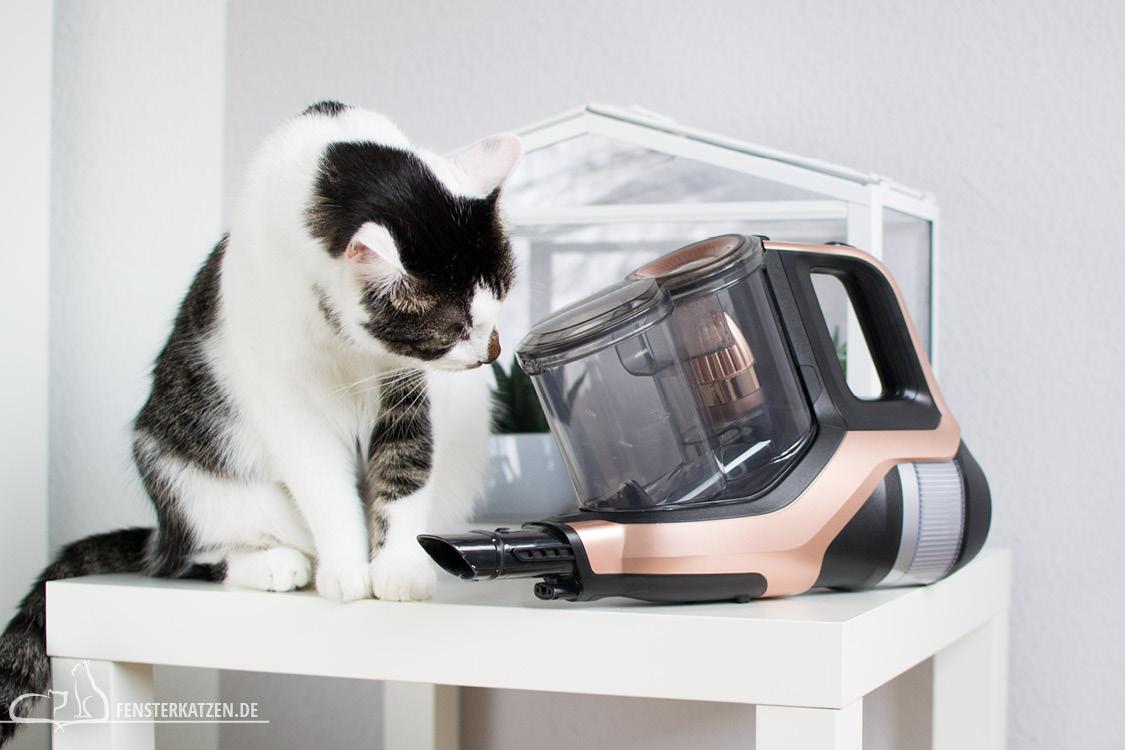 Fensterkatzen-Getestet-Akku-Staubsauger-SpeedPro-Max-Philips-Handstaubsauger-Flash