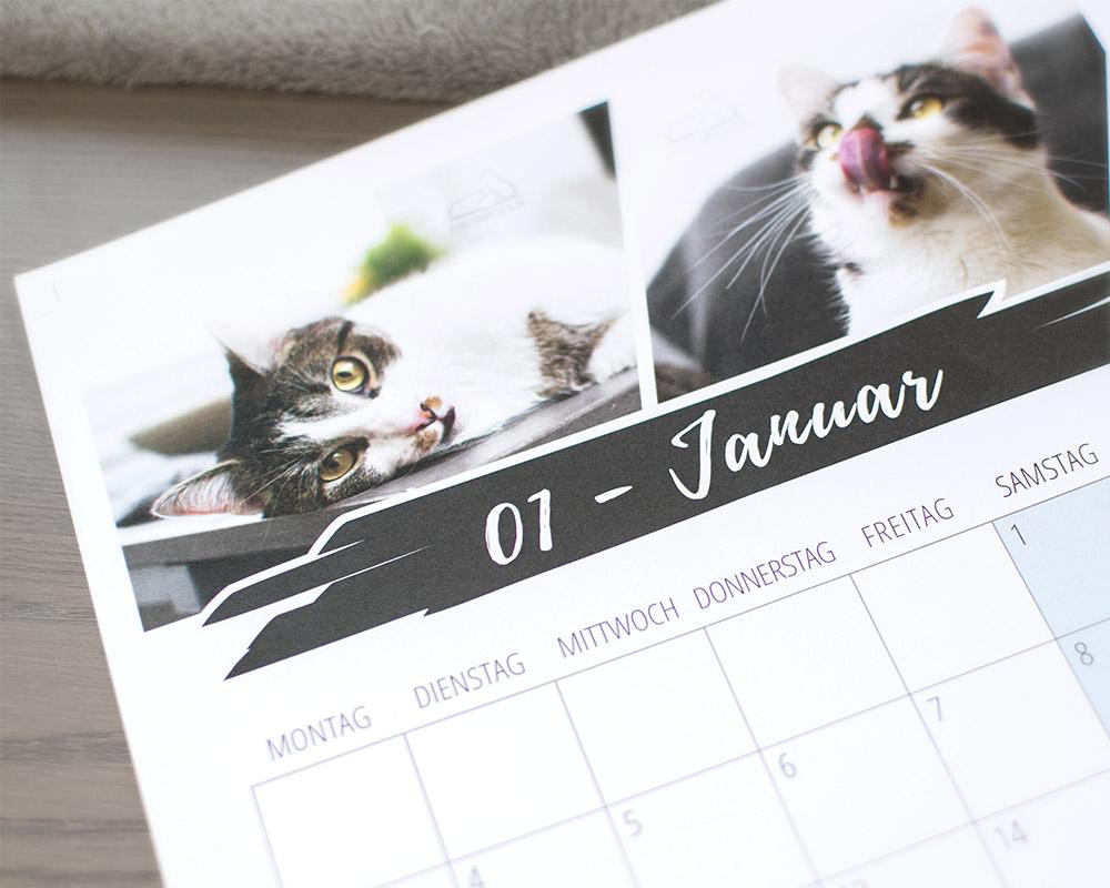 Fensterkatzen-Kalender-2019-Detail