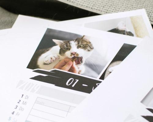 Fensterkatzen-Kalender-2019-Familienplaner-Detail-2