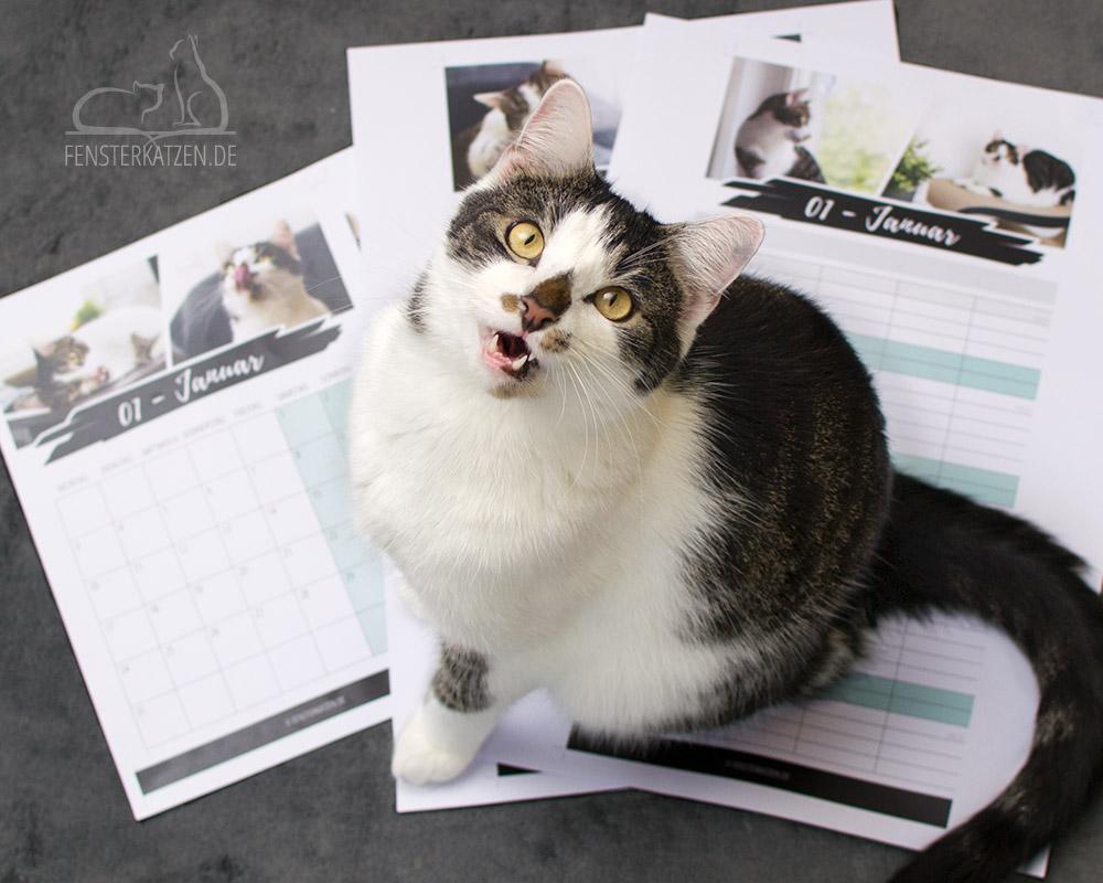 Fensterkatzen-Kalender-2019-Flash