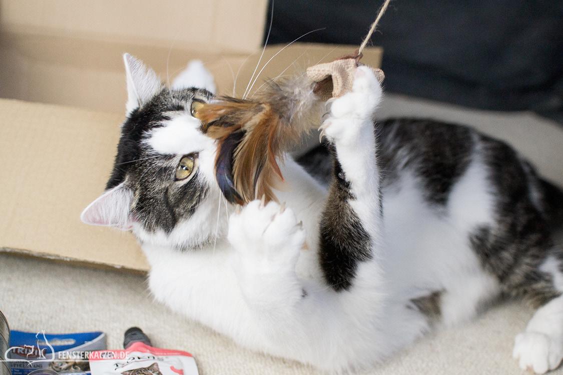 Fensterkatzen-Alltag-Tauschpaket-Katze-Kitten-Kater-Feder-Angel-1