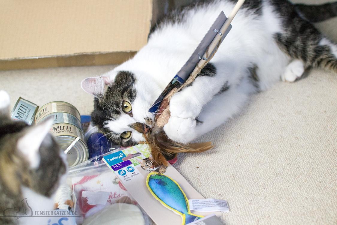 Fensterkatzen-Alltag-Tauschpaket-Katze-Kitten-Kater-Feder-Angel-2