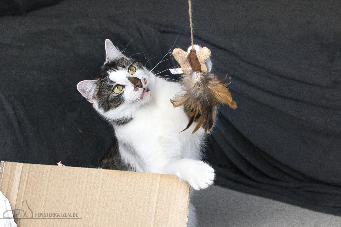 Fensterkatzen-Alltag-Tauschpaket-Katze-Kitten-Kater-Feder-Angel-3