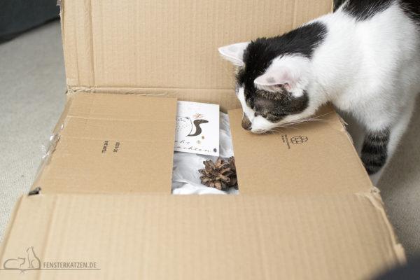 Fensterkatzen-Alltag-Tauschpaket-Katze-Kitten-Kater-Karton-2