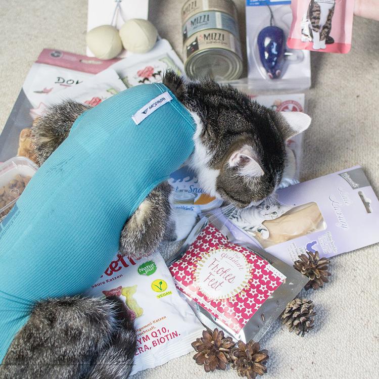 Fensterkatzen-Alltag-Tauschpaket-Katze-Kitten-Kater-Nala-2