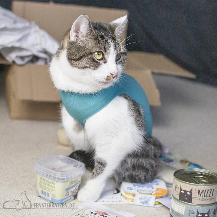 Fensterkatzen-Alltag-Tauschpaket-Katze-Kitten-Kater-Nala