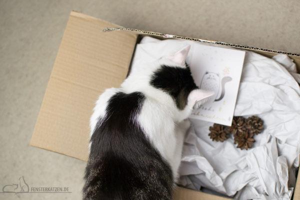 Fensterkatzen-Alltag-Tauschpaket-Katze-Kitten-Kater-Schnuppern