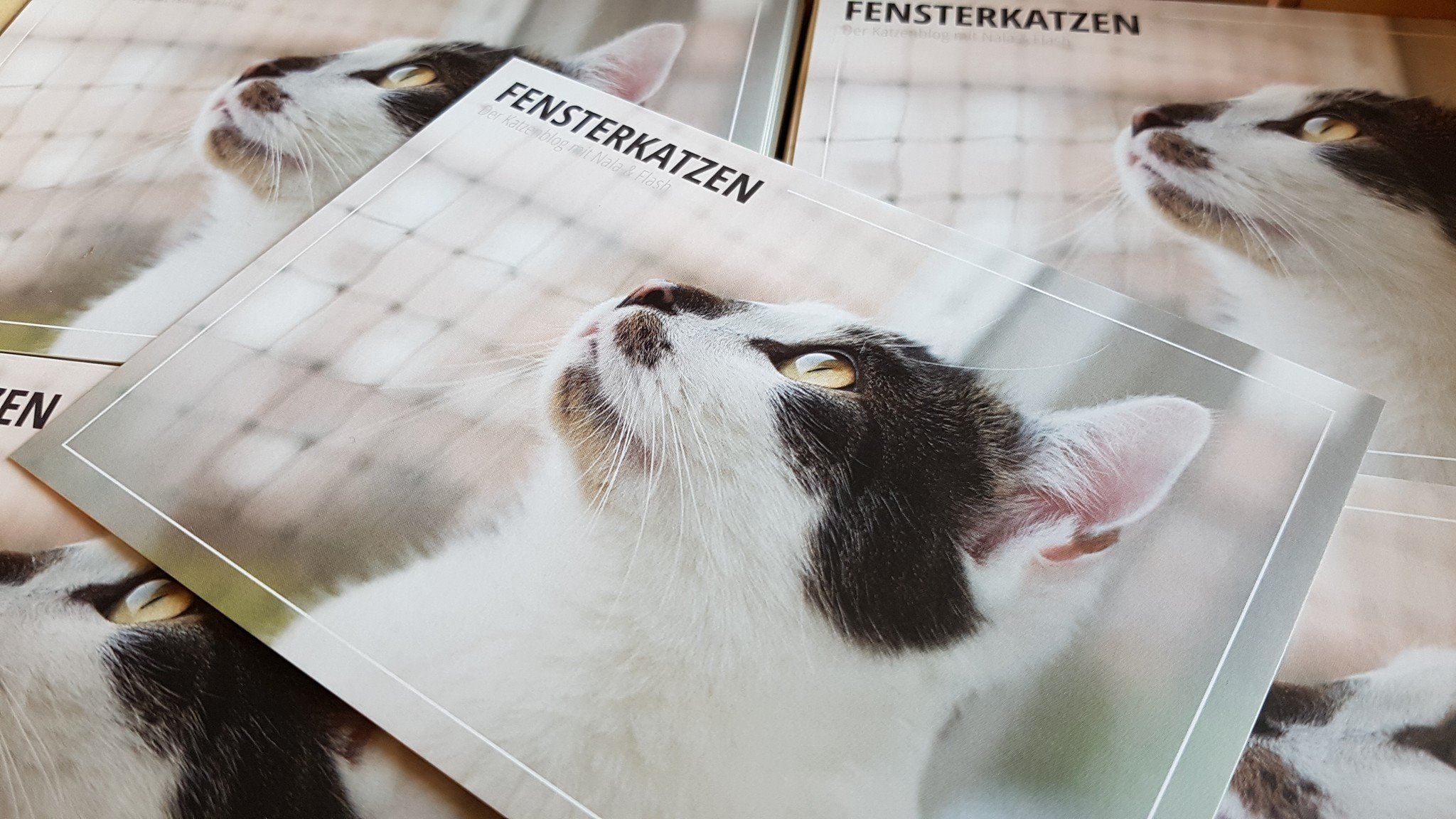 Fensterkatzen-Alltag-Jahresrueckblick-2018-Postkarte-front