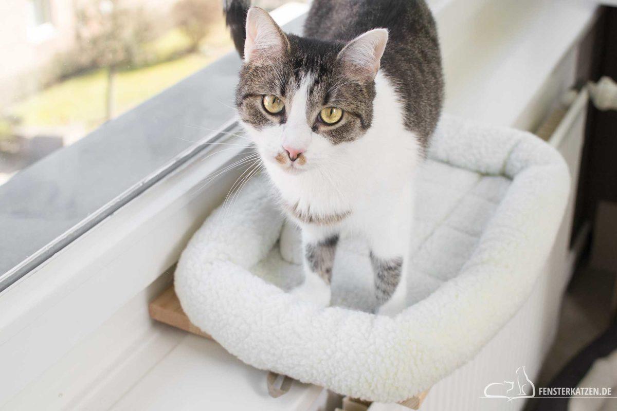 Fensterkatzen-DIY-Fensterliege-Katzen-hundkatzemaus-Titelbild