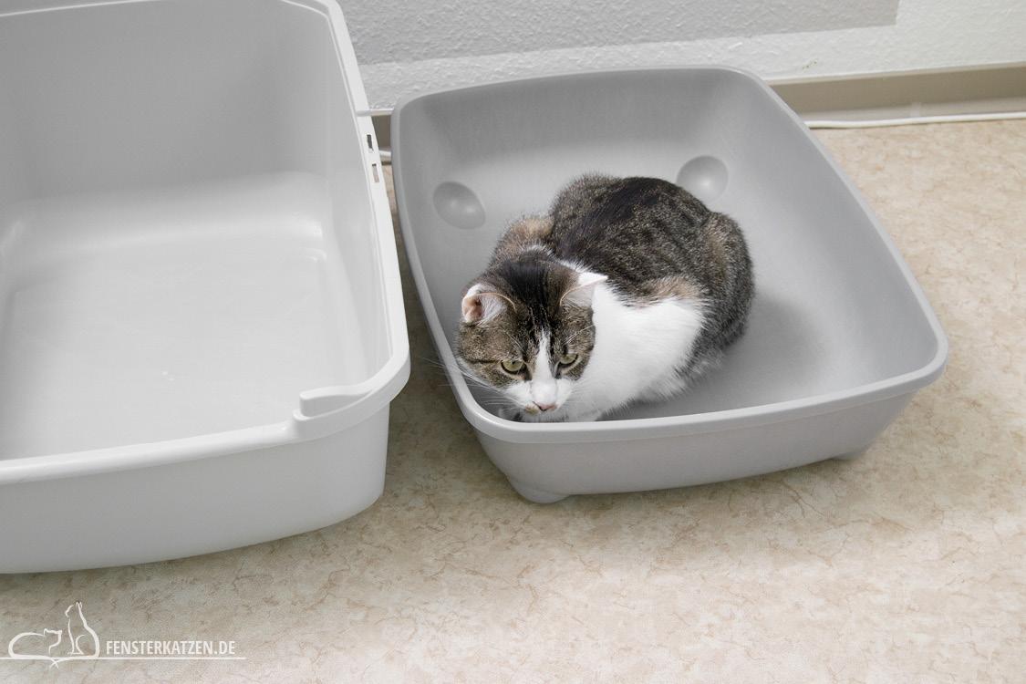 Fensterkatzen-Das-Erste-Mal-Das-Katzenklo-befuellen-Nala-im-Klo