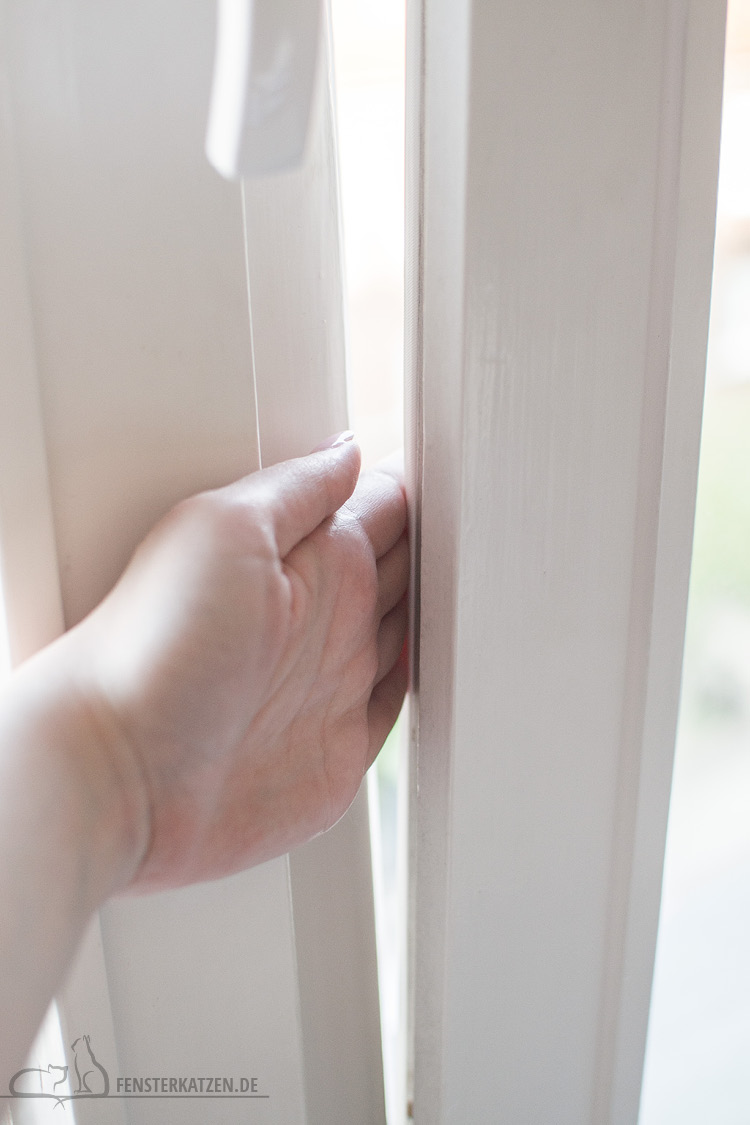 Fensterkatzen-Ratgeber-Katzensichere-Wohnung-Was-Muss-Ich-Beachten-Fenster-einklemmen