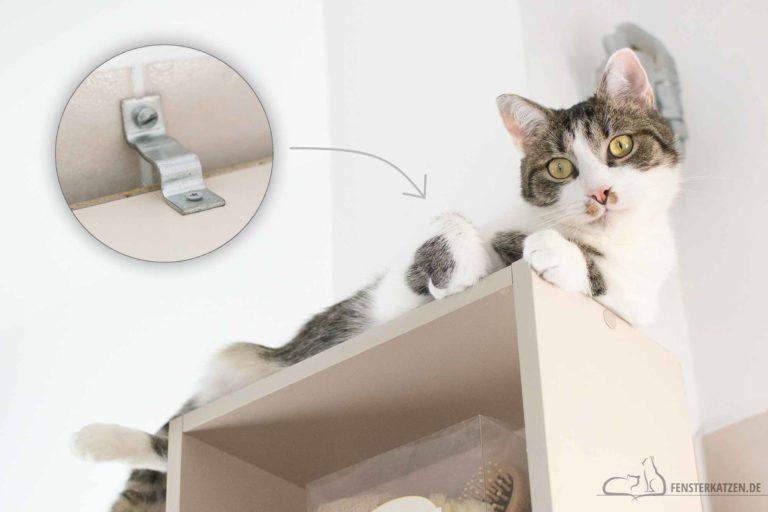 Katzensichere Wohnung – Was muss ich beachten? // TEIL 1