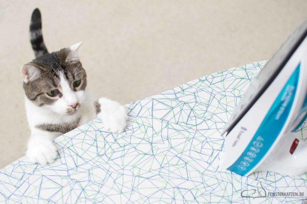 Fensterkatzen-Ratgeber-Katzensichere-Wohnung-Was-Muss-Ich-Beachten-Teil-Zwei-Titelbild