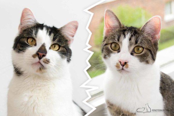 Fensterkatzen-Alltag-Verhaeltnis-von-Nala-Flash-Titelbild