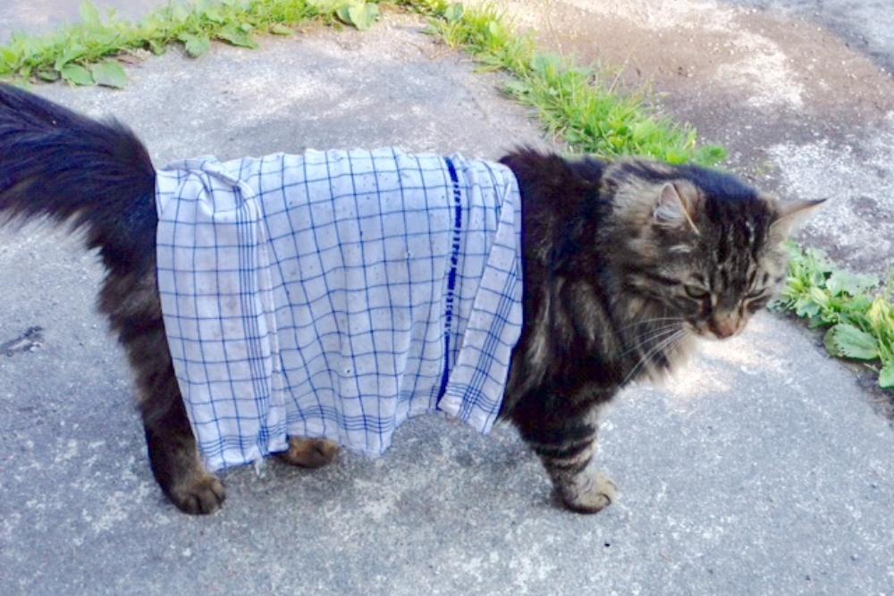 Abkühlung-Katzen-Hitze-Tipp-Katzekittenkater