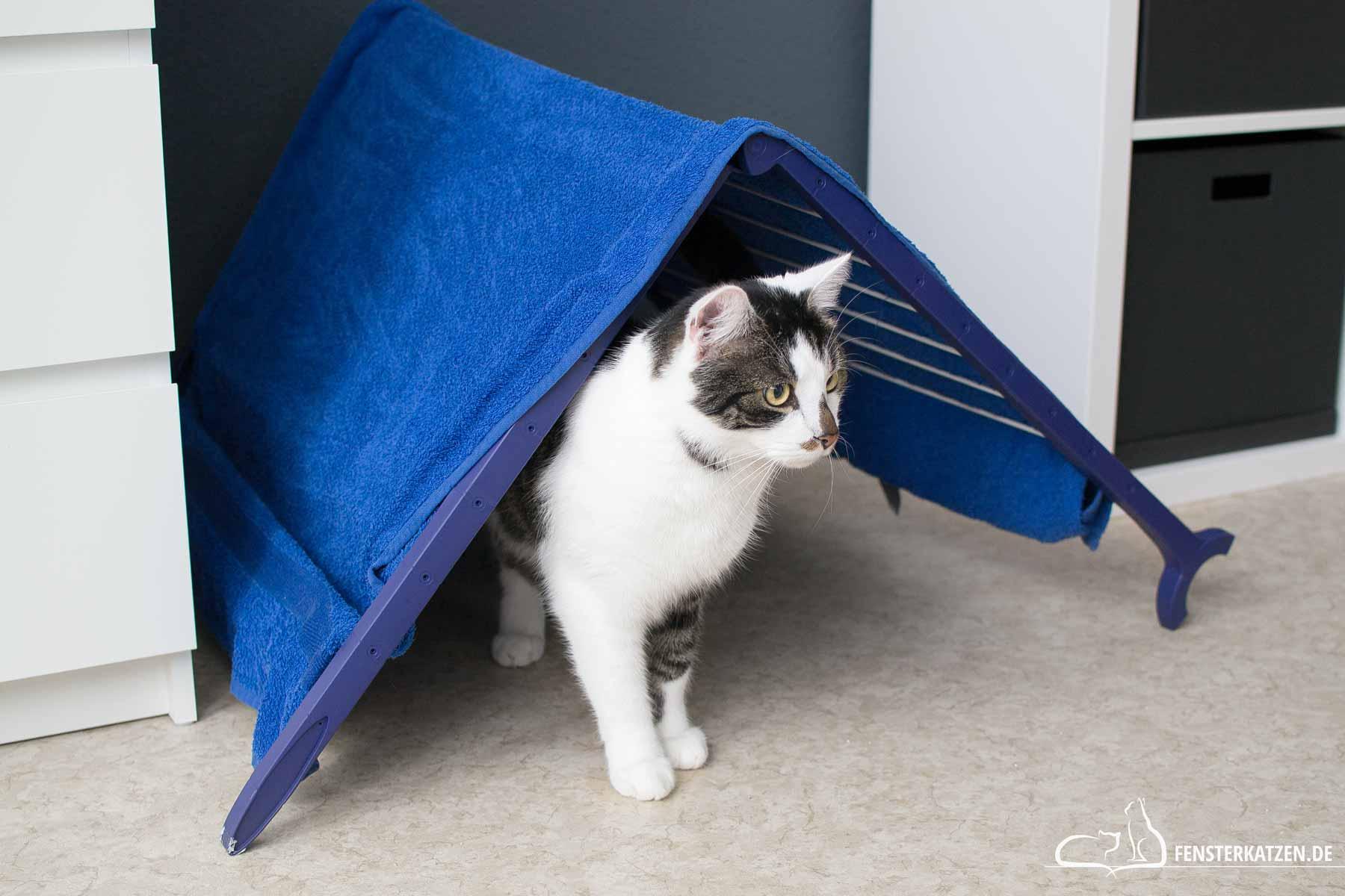 Fensterkatzen-Ratgeber-Abkuehlung-Katze-Tipps-Hitze-Heisse-Tage-Titelbild