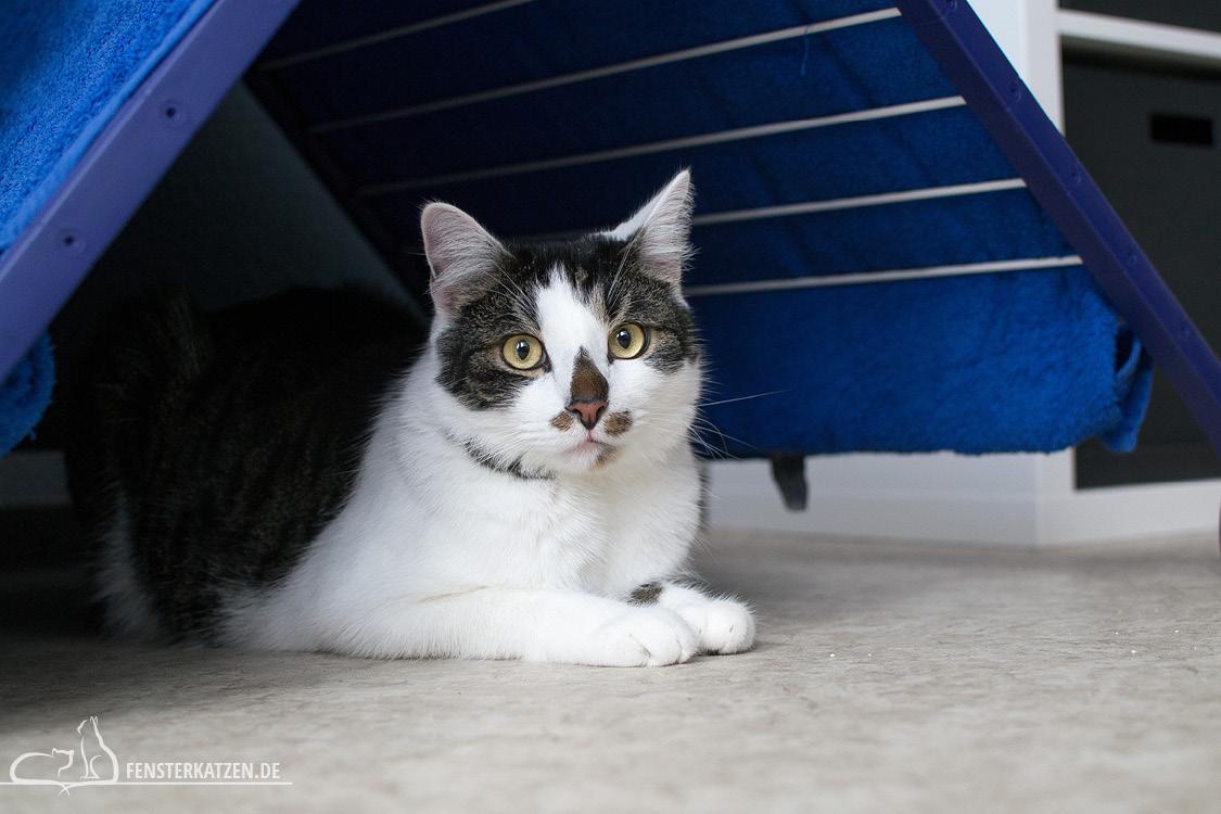 Fensterkatzen-Ratgeber-Abkuehlung-Katze-Tipps-Hitze-Kaeltezelt-03