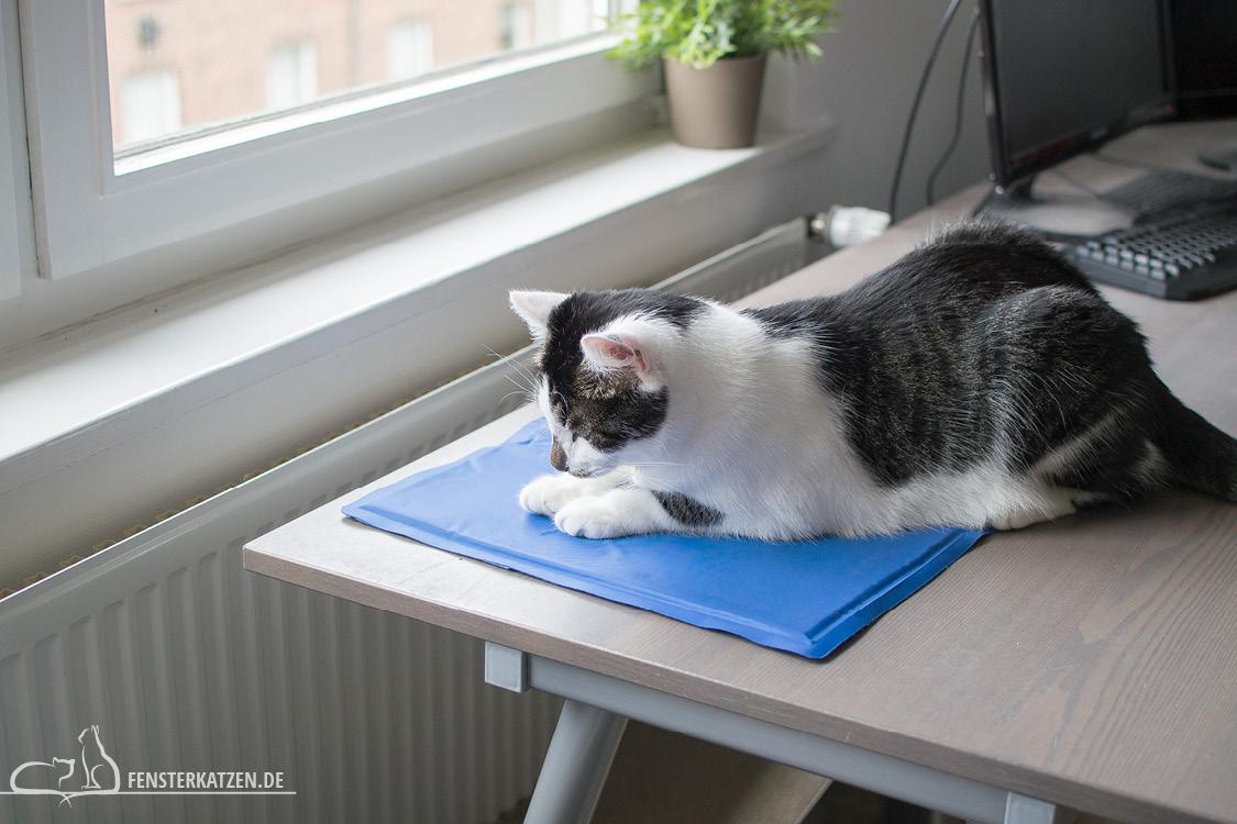 Fensterkatzen-Ratgeber-Abkuehlung-Katze-Tipps-Hitze-Kuehlmatte