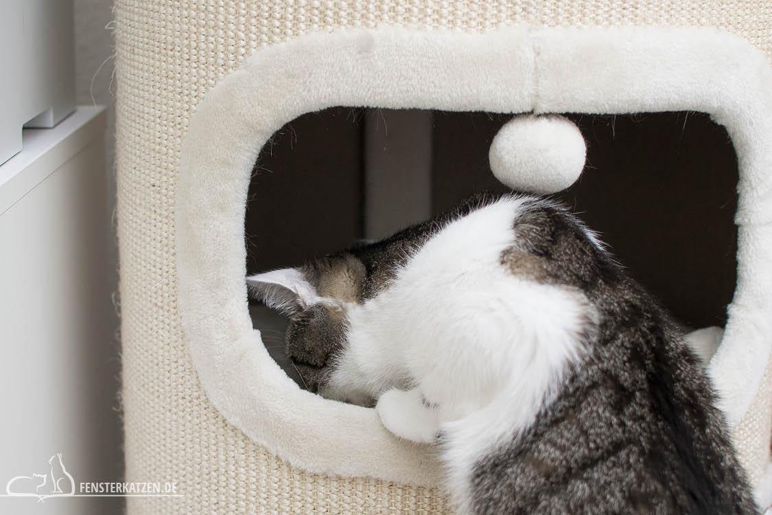 Fensterkatzen-Alltag-3-Futterspiele-Koerper-Koepfchen-Futter-Suchen-Kratztonne